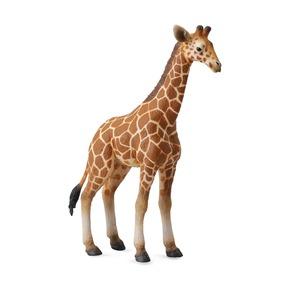 Жеребенок сетчатого жирафа